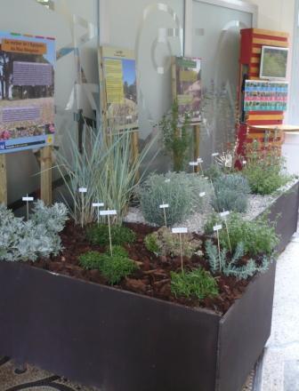 Plantes économes en eau et jardins secs - Agence Locale de l\'Energie